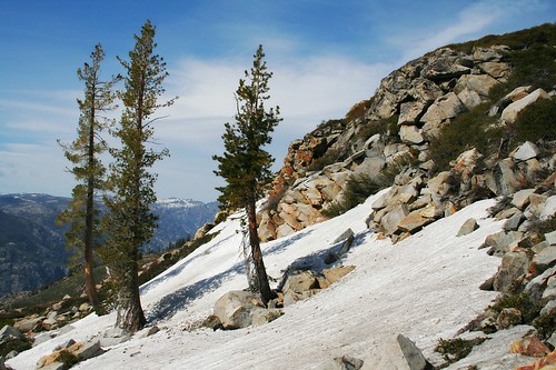 Trees Snow Rocks 8409