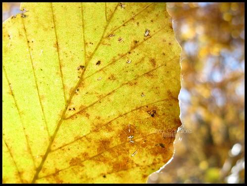 Oro verde by [Piccola_iena]