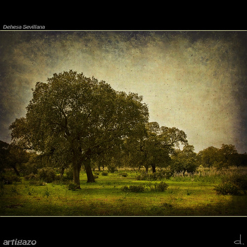 españa canon landscape sevilla weide spain espanha... (Photo: Artigazo  on Flickr)