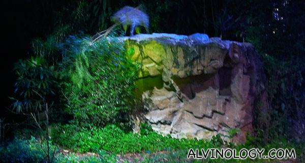 A Hyena lifting a giant tree branch
