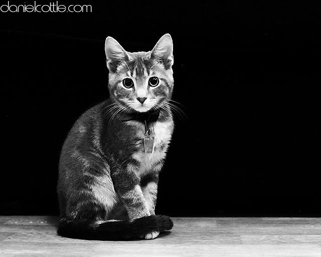 Day 10- Finn the illegal kitty