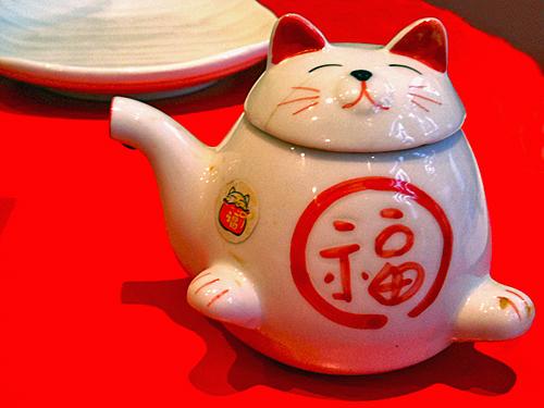 little soy cat