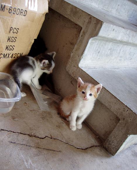 Kittens & Stairs