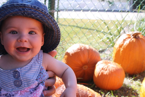 Ruby, First Pumpkin Patch