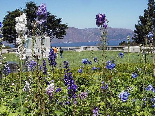 Flowers and the bay