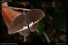 ButterflyAtRanganathittu