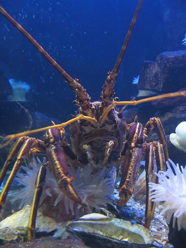 At the Aquarium in St. Andrews