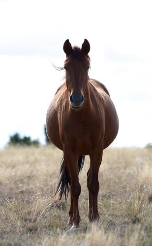 NM Wild Horses nwm (14)