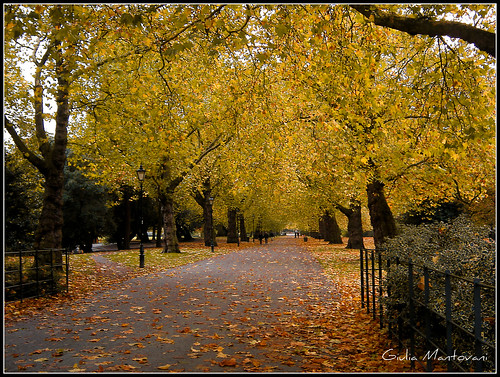 street autumn trees fall microsoft