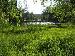 Pond at Duck Soup Inn