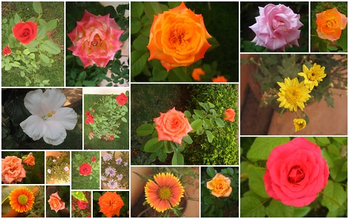 Dad's Garden Flowers