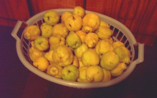 quince bounty