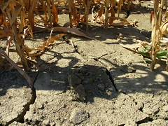 Desertificazione, desertification, desertifikation