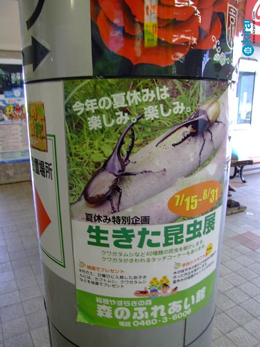 kabuto escarabajo