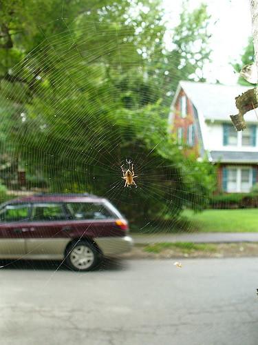 Suburban spider