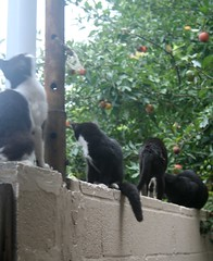 Alley Cat Colony
