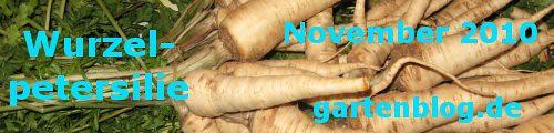 Garten-Koch-Event November 2010: Wurzelpetersilie [30. November 2010]