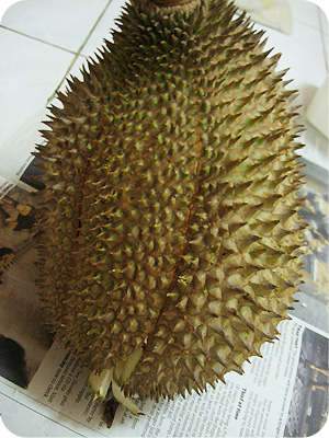 Durian D22