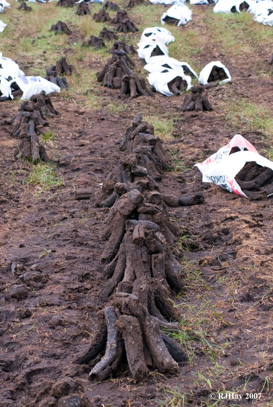 Rows of drying peat