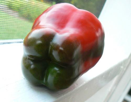 Buran Sweet Pepper
