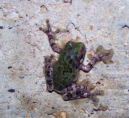 frog better.jpg