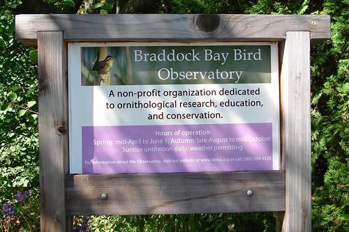 Braddock Bay Bird Observatory