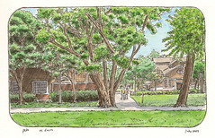 uc davis trees encore