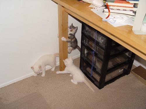 Kittens sliding down pole
