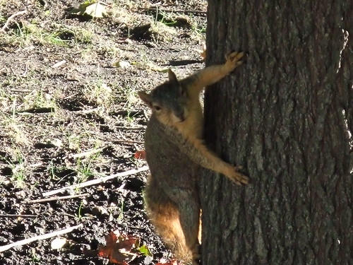 Suspicious squirrel