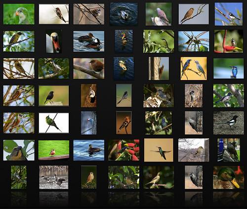 birds of the world mosaic