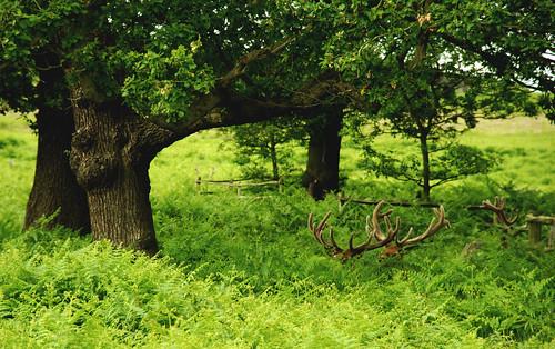 Bradgate Park (prakashodedra on Flickr: Click image)