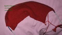 Wren first sleeve