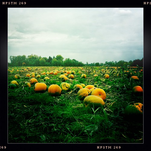 Rural Pumpkin Patch
