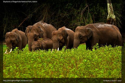 ElephantsOfKabini