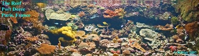 The Reef - Port Dorée  Aquarium