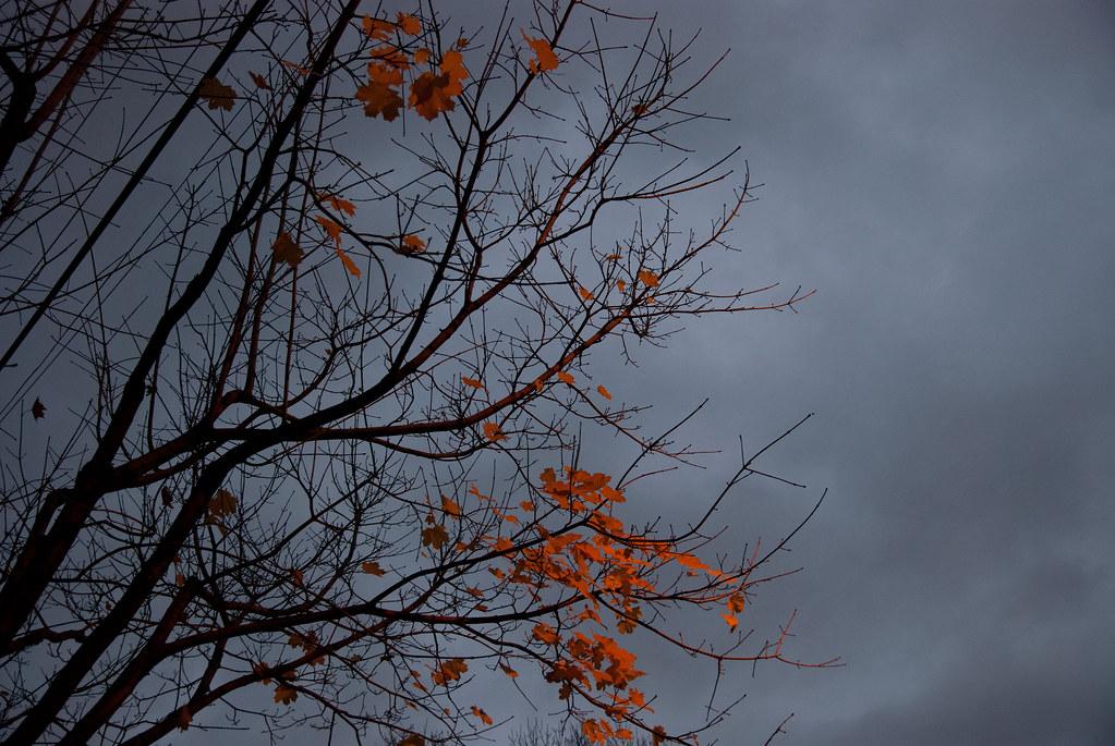 Dusk Leaves 2