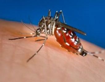 O jovem e a dengue