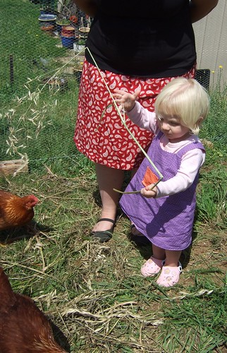 alice and chooks