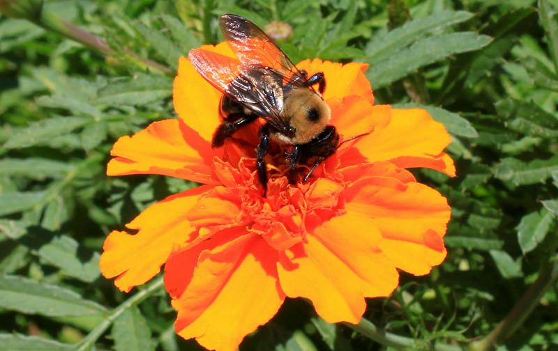 Bee Orange