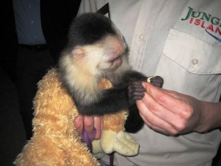 Gizmo the Monkey! Makes Appearance at Transplant Foundation's Emerald Nights, Jungle Island, Miami, Fla.