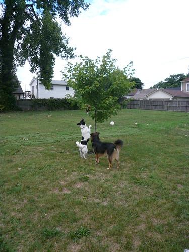 Doggie Pinata