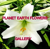 PLANET EARTH FLOWERS group gallery. Showcase galleries on display in PLANET EARTH NEWSLETTER. New Updates ck. them out.