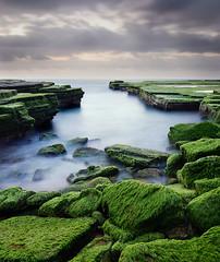 Green Weed Cove