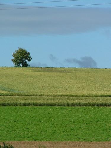 Arbre dans les champs, Bach, De
