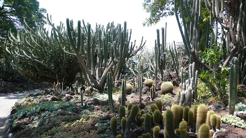 Cactus garden at the Huntington 12 July 2007