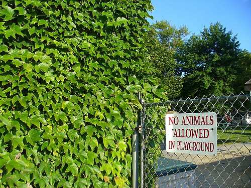 No animals