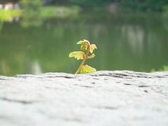 Plants Grow on Rocks in the City