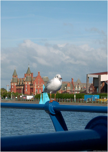 Seagull, Southport