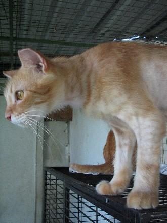 GingerLongHairedBro_20070922_13x