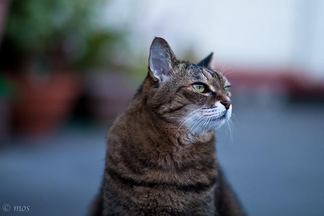 The portrait of my dear cat